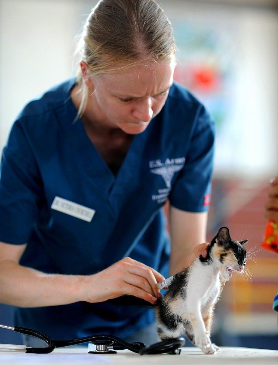 Vælg den rette dyreklinik til din hund eller kat